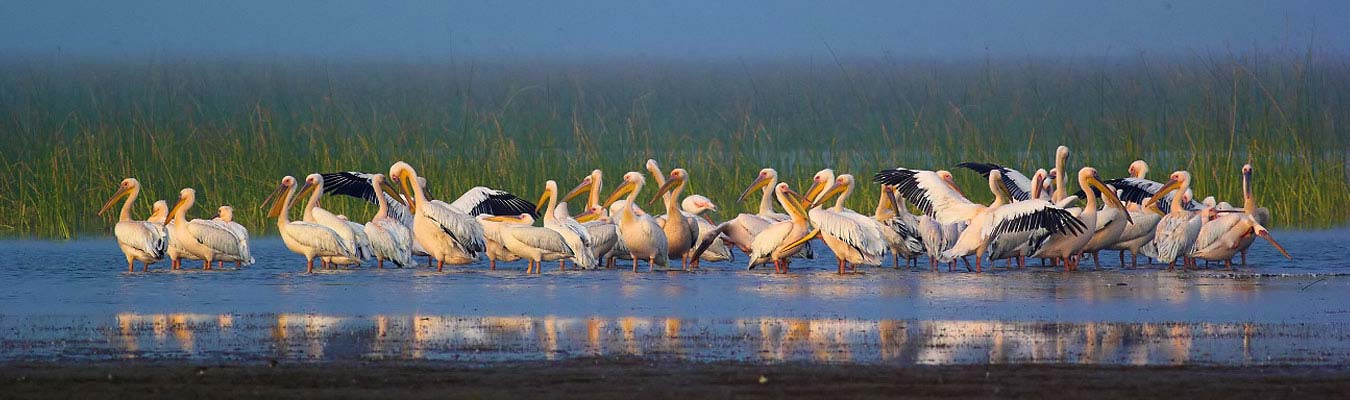 Birding Tours in India & Sri Lanka