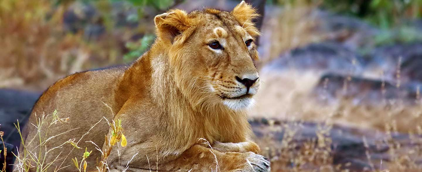 India Big Five Wildlife Holiday