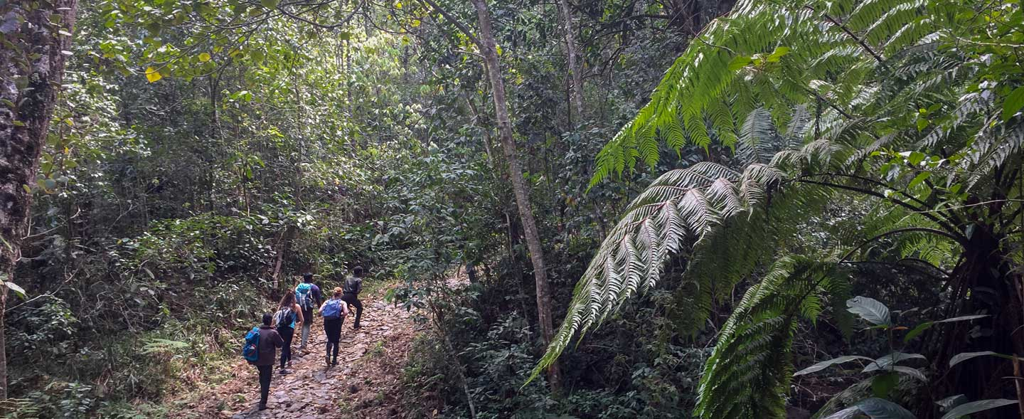 Rainforest Trek at Munnar