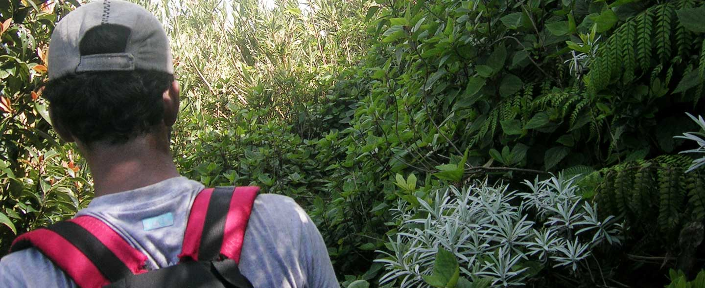 Western Ghats Botanical Tours