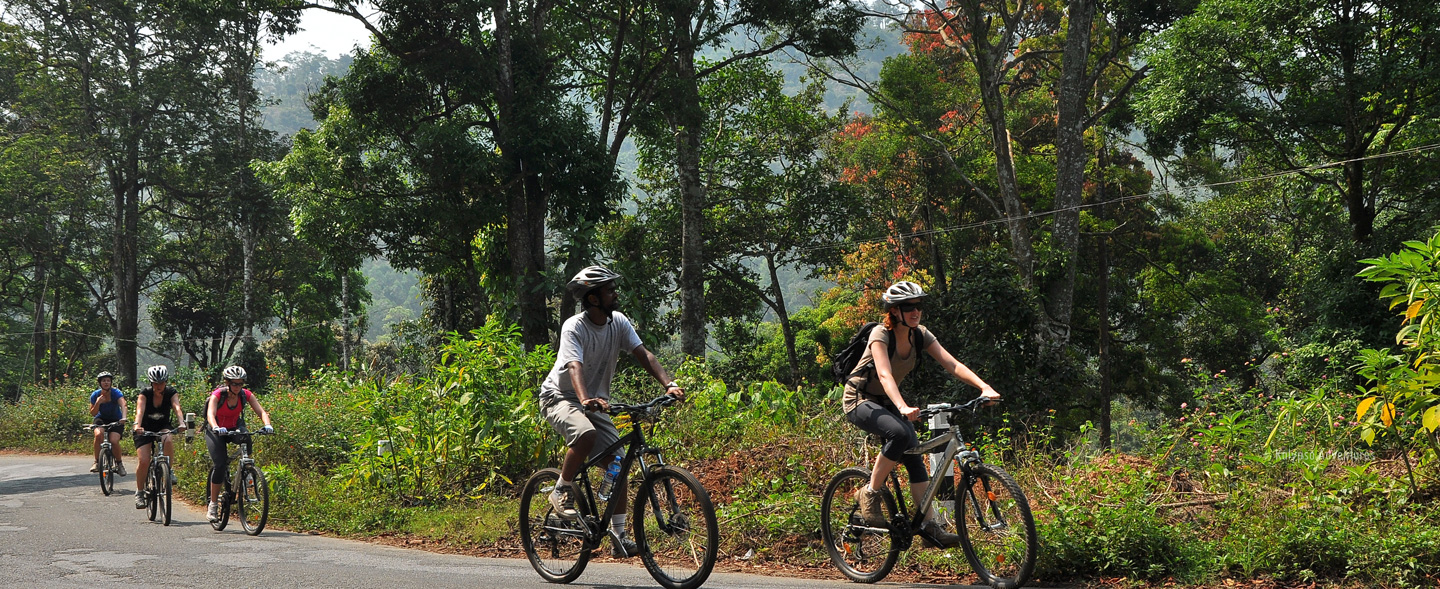 Cycling Through The Cardamom Hills From Periyar