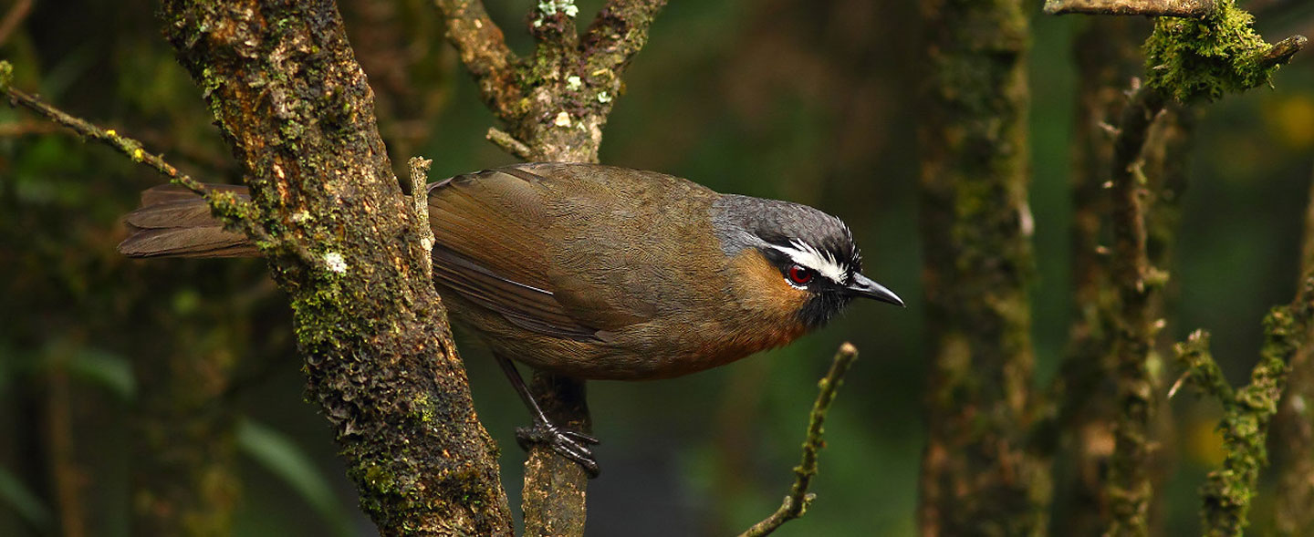 Western Ghats And Sri Lanka Bird Watching Tour
