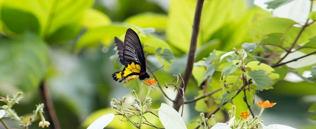 Butterflies & Dragonflies Tour of  Western Ghats