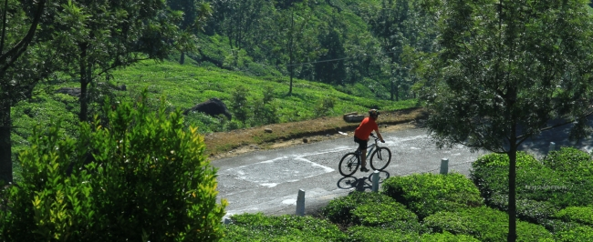 Mountain Biking at Munnar
