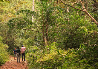 Western Ghats and Sri Lanka Birding Tour