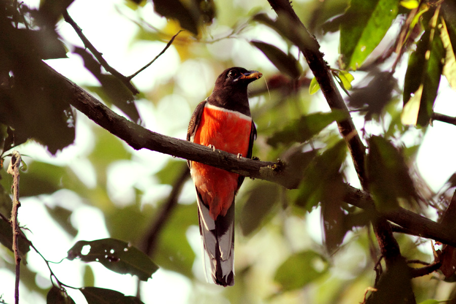 Kalypso Adventures South India bird watching tour